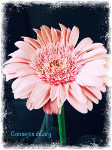 Como mejorar tu relación con tu pareja, con una flor es un pequeño detalle que comenzará hacer la diferencia.